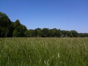 Eine Wiese, ein Waldrand und blauer Himmel