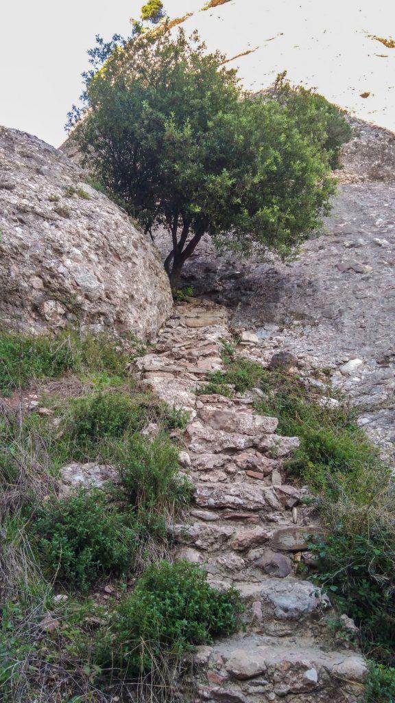 Steiler Steinpfad den Berg hinauf mit Baum im Weg