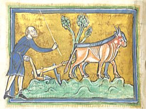 Mittelalterliche Buchmalerei eines Mannes mit einem Ochsen beim Pflügen
